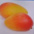 芒果a3l